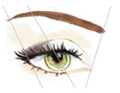Brow Enhancement